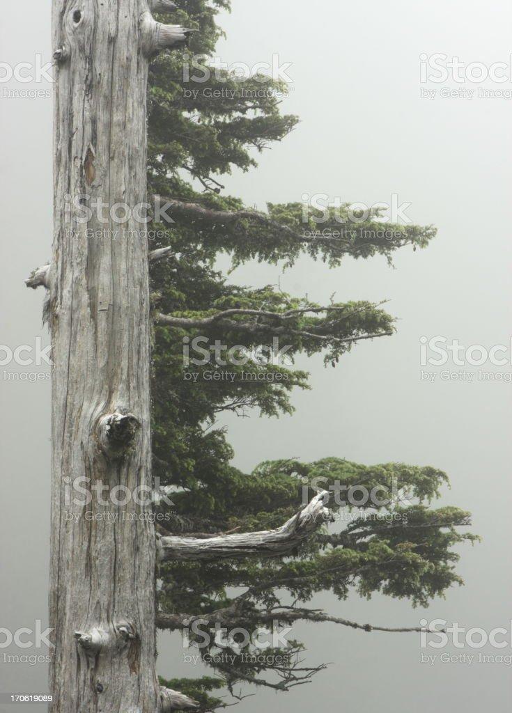 Rainforest Tree Branch Fog stock photo