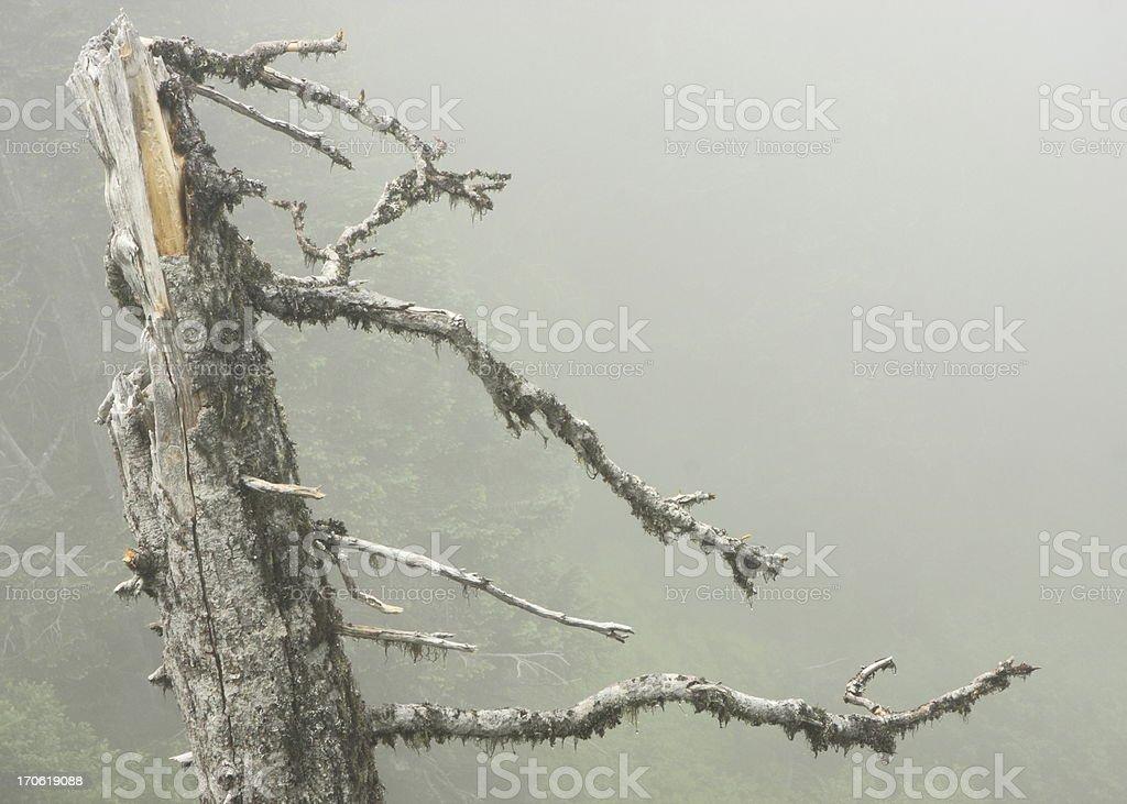 Rainforest Tree Branch Moss Fog stock photo