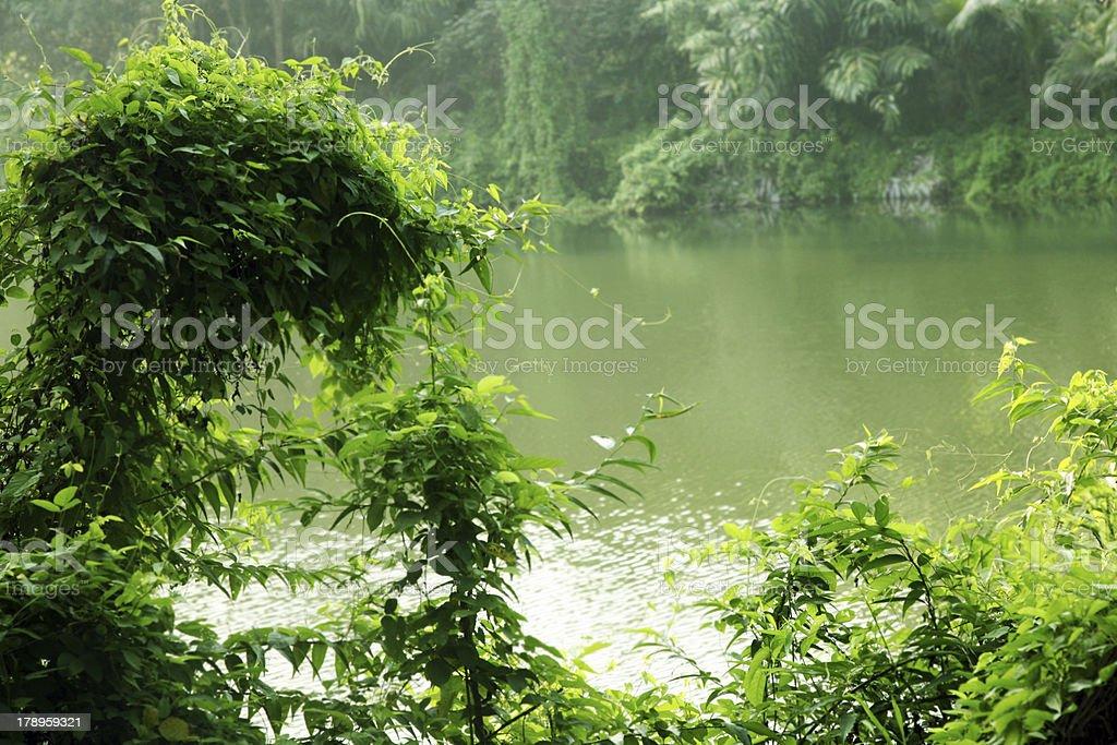 Regenwald-Blätter Lizenzfreies stock-foto