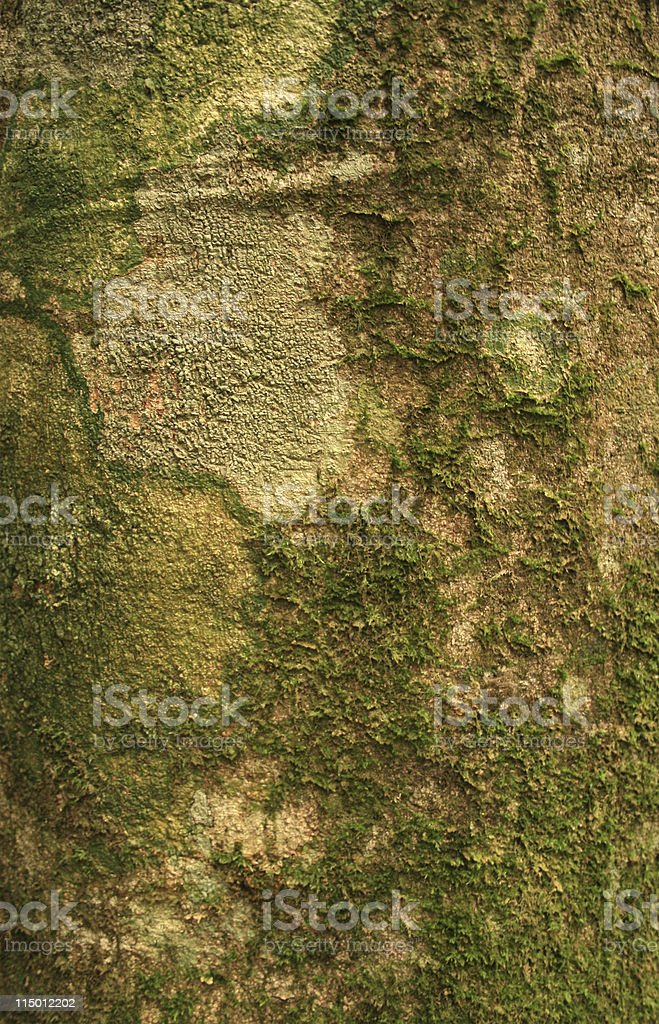 Rainforest Tree Trunk royalty-free stock photo
