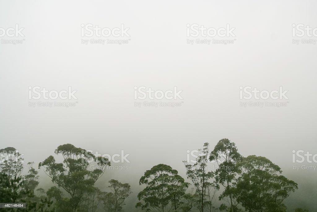 Rainforest treetops against white fog stock photo