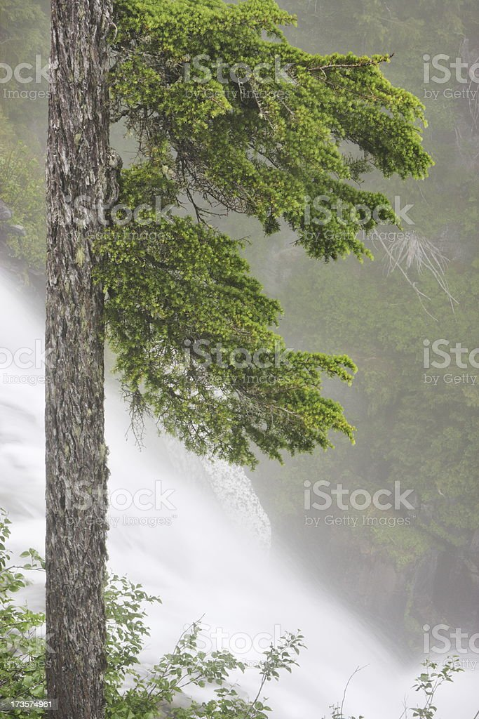 Rainforest Waterfall Fog Forest Wilderness royalty-free stock photo