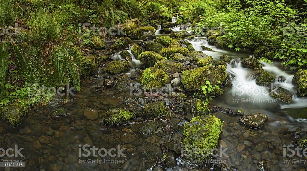 Rainforest waterfall idyllic nature creek vibrant foliage stock photo