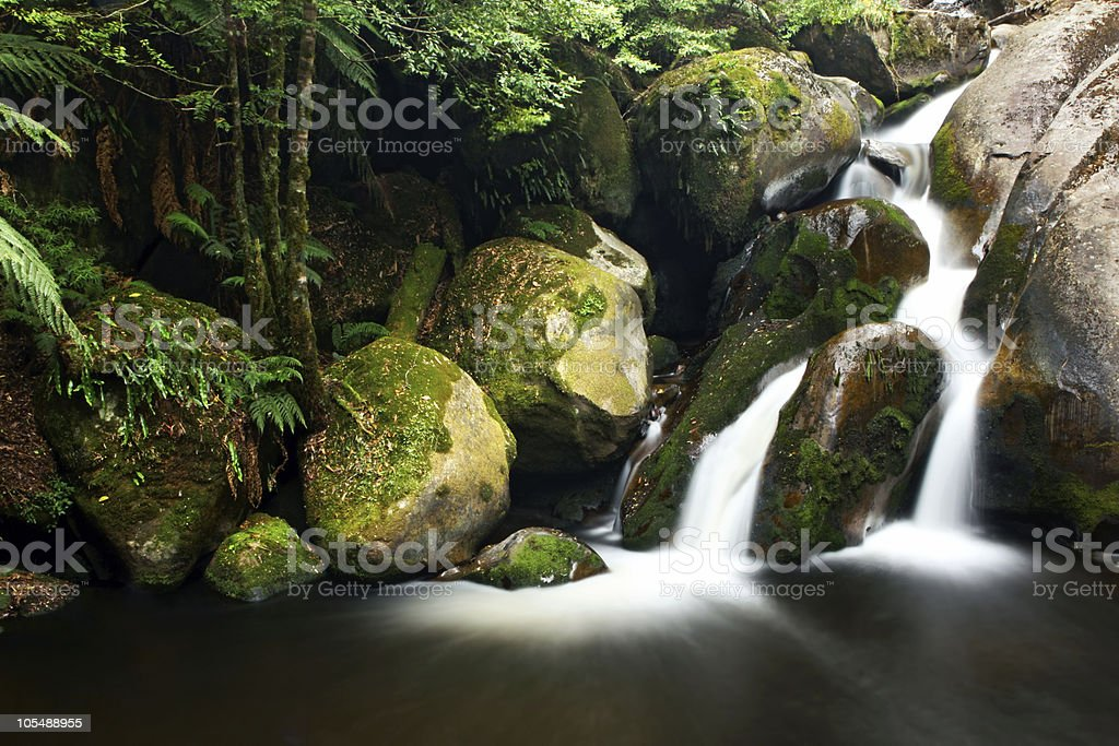 Rainforest Waterfall royalty-free stock photo