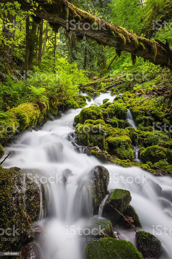 Rainforest waterfall vibrant green foliage deep in Pacific Northwest wilderness stock photo
