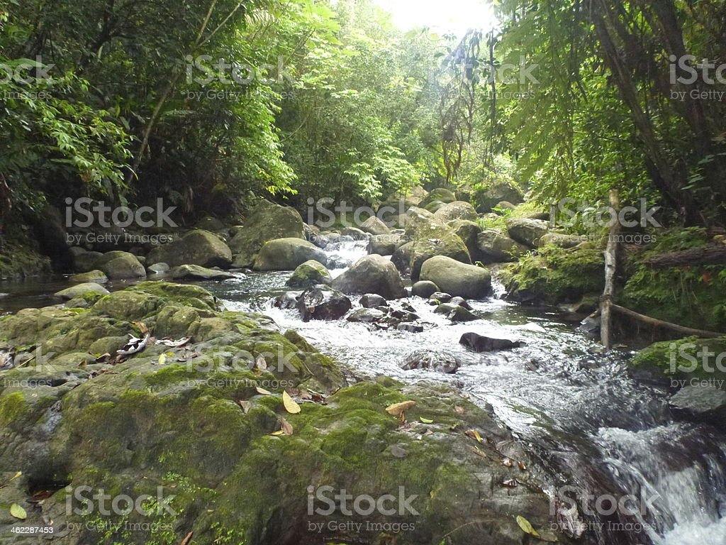 Rainforest with waterfall stock photo