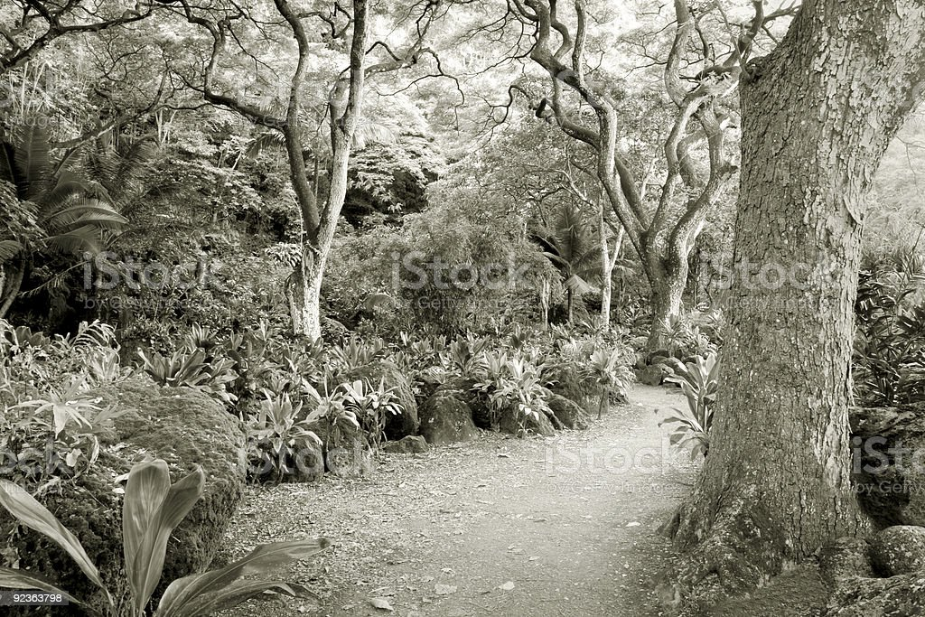 Rainforest--at the Waimea Valley Audubon Center on Oahu, Hawaii royalty-free stock photo