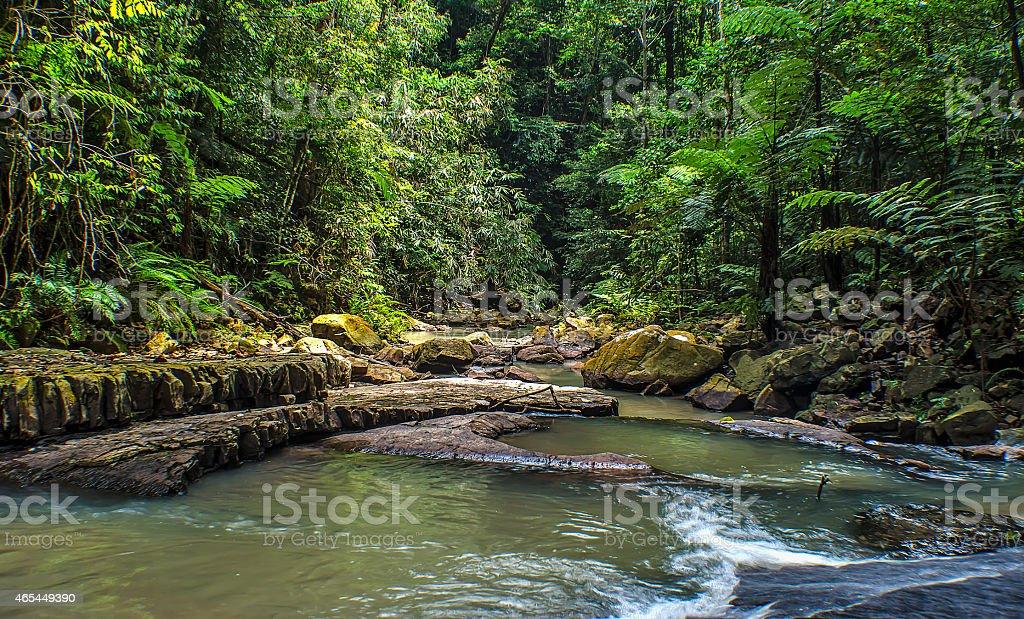 Rainforests of Kuala Sentul, Maran, Malaysia stock photo