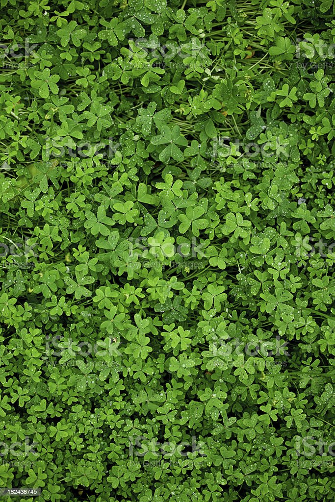Raining Over Clover Field stock photo