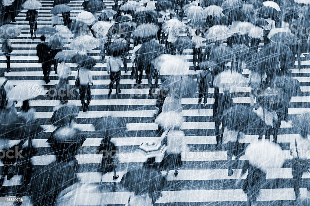 Rainy Commuters at Crosswalk stock photo