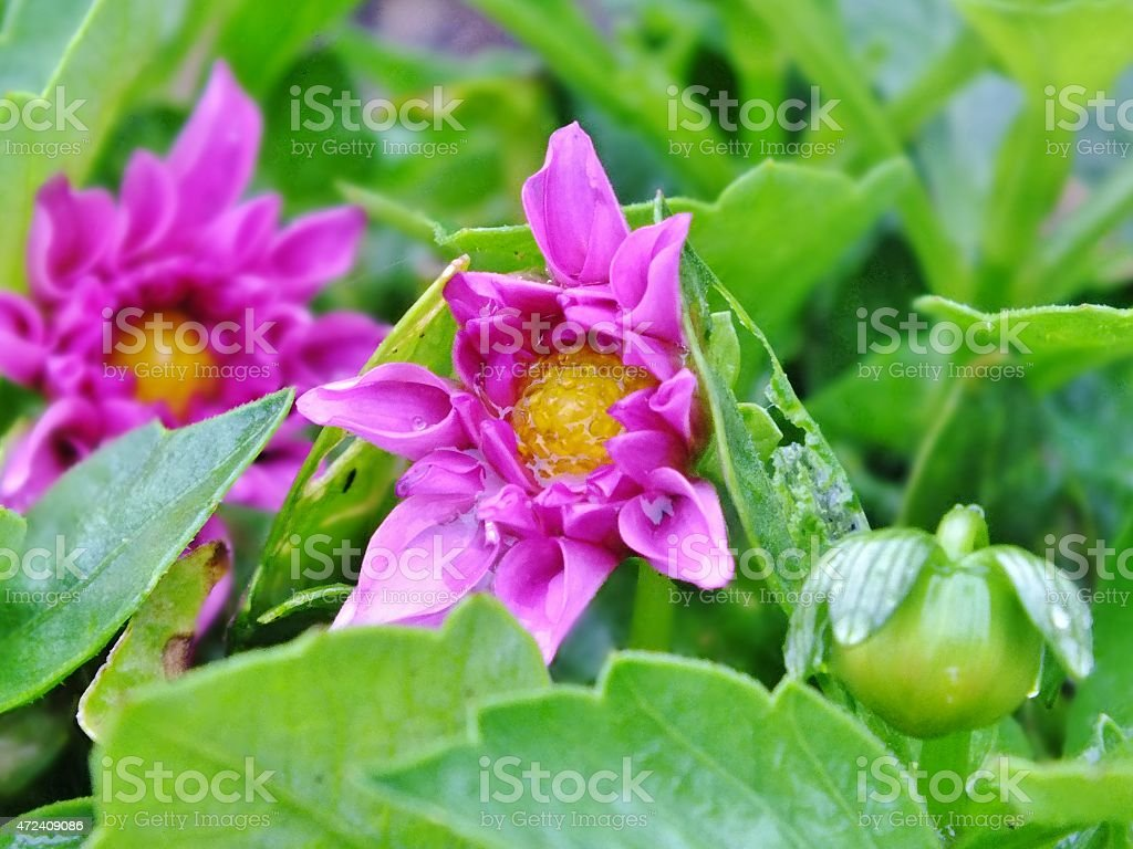Chuvoso de flores foto royalty-free