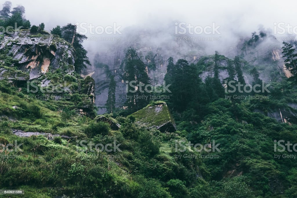 Rainy foggy himalayan forest stock photo