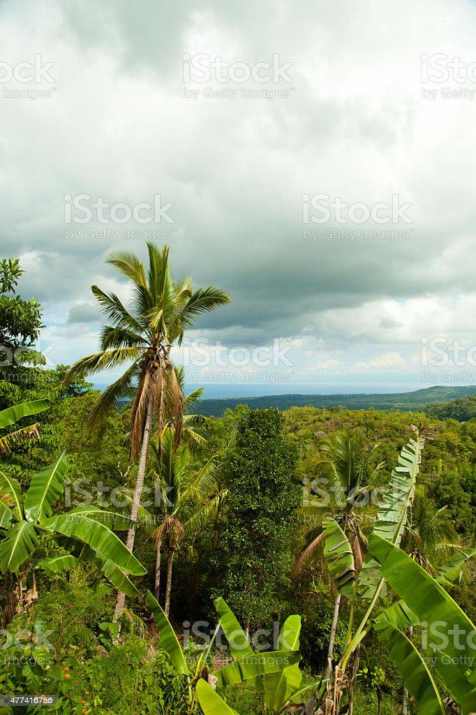 Forêt de pluie photo libre de droits