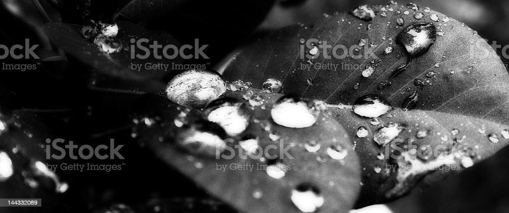 Rainy Leaf stock photo