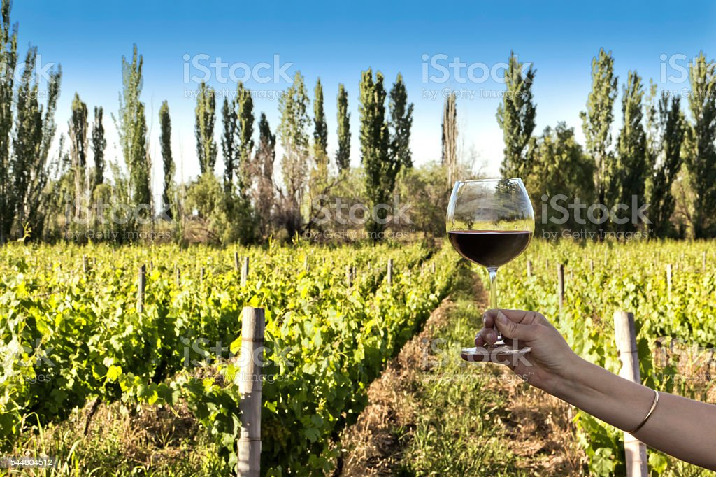 Raise one's glass with red wine stock photo