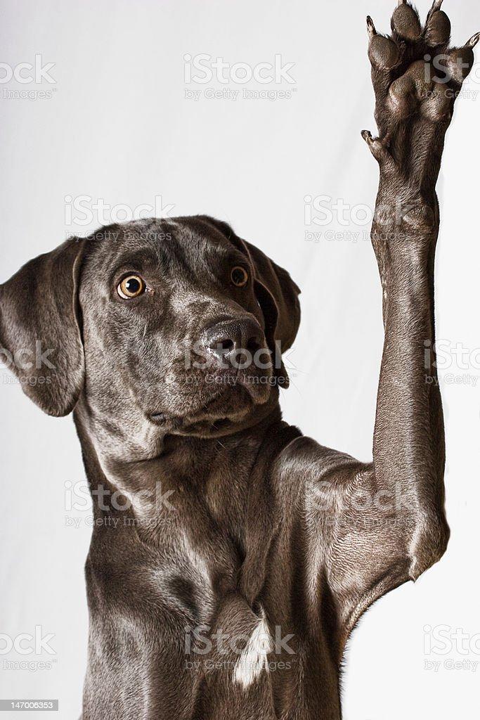 Levez la main photo libre de droits