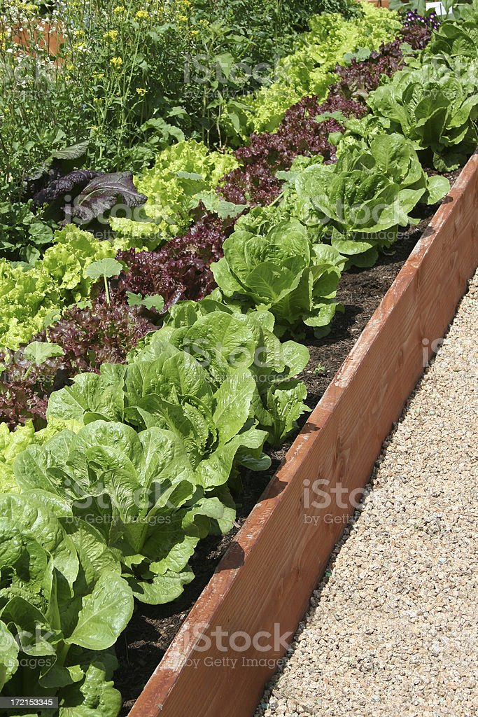 Raised Bed royalty-free stock photo