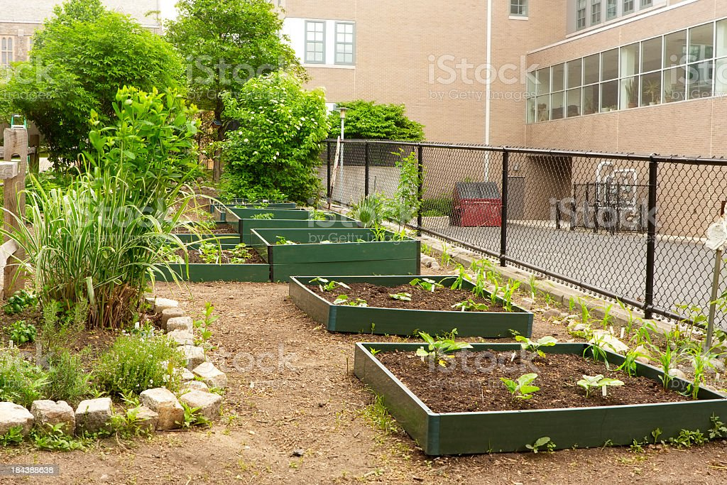 Raised flower beds in a school garden royalty-free stock photo