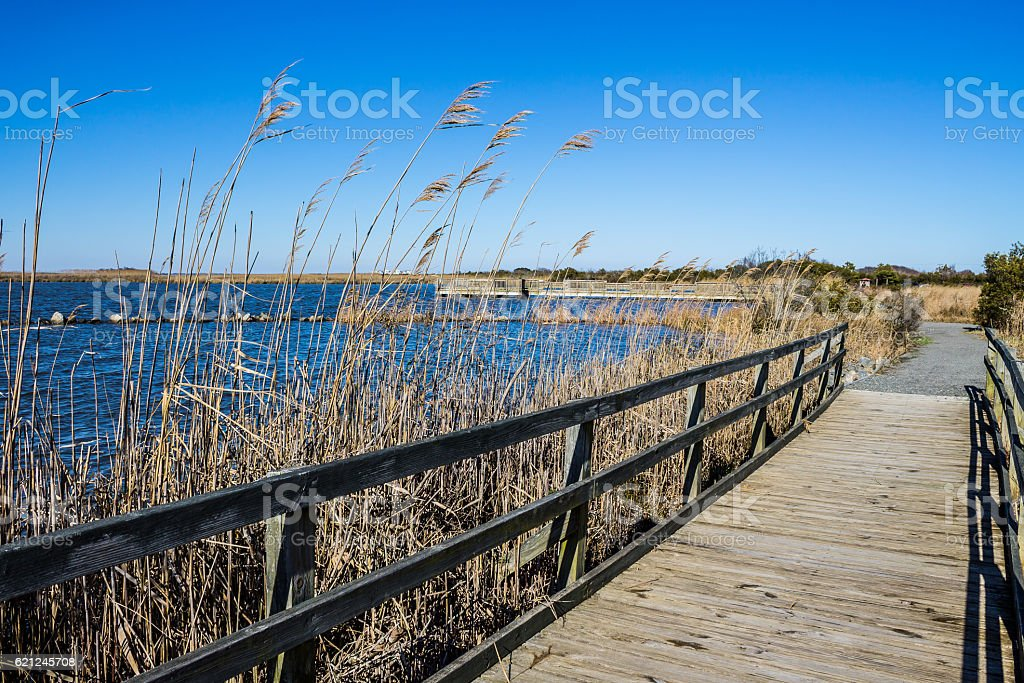 Raised Walkway through Marsh at Back Bay National Wildlife Refuge stock photo