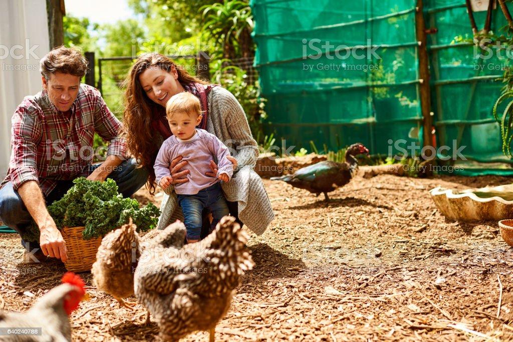 Raising their child in an organic environment stock photo
