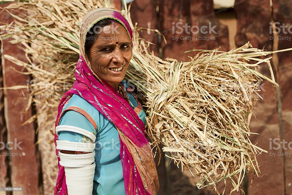 Rajasthani tribal woman collecting grain. Bishnoi village, India. royalty-free stock photo