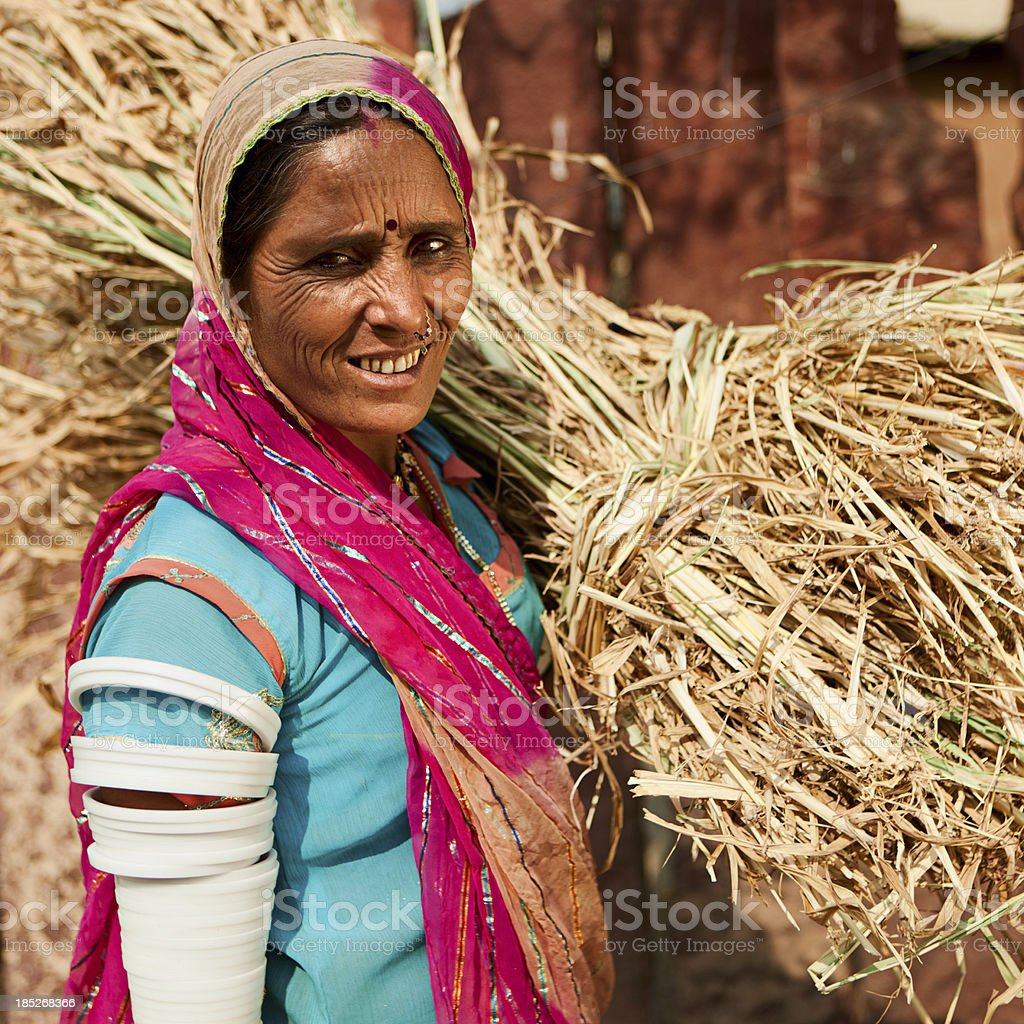 Rajasthani tribal woman collecting grain. Bishnoi village, India. royalty-free stock photo