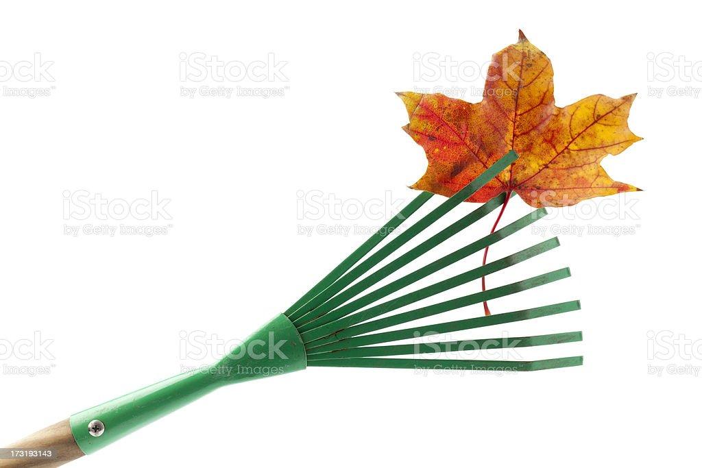 Rake, Leaf Isolated on White royalty-free stock photo