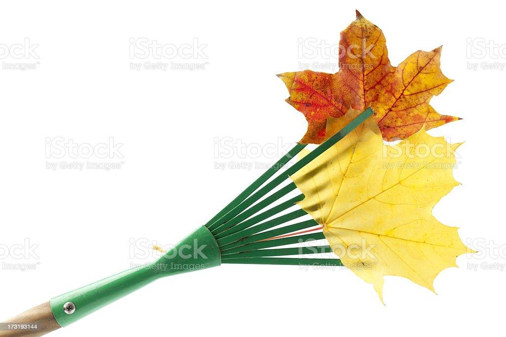 Rake, Leaves Isolated on White royalty-free stock photo