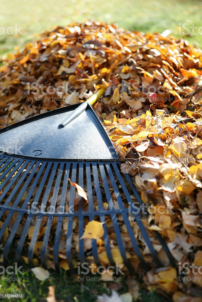 Rake royalty-free stock photo