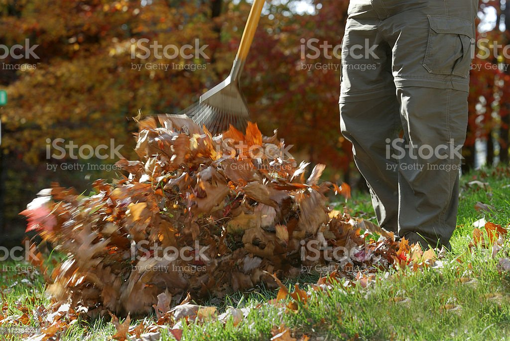 Raking a pile of leaves royalty-free stock photo