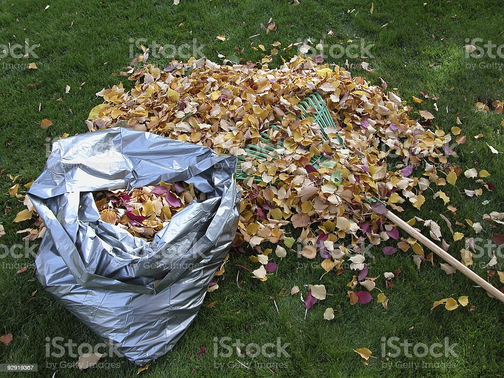 Raking and bagging leaves in autumn stock photo