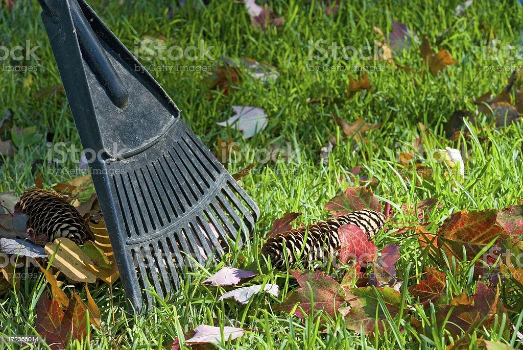 Raking Fall Leaves stock photo