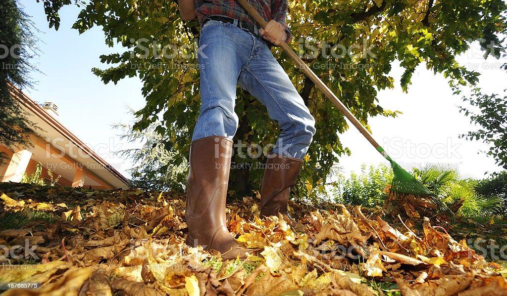 Raking leaves stock photo