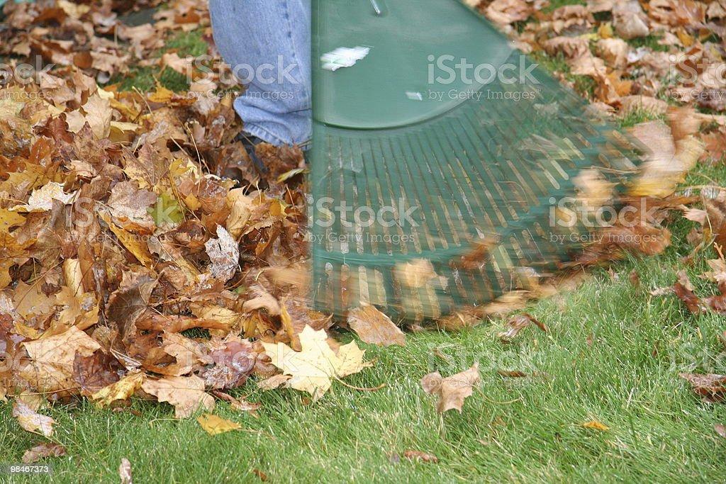 Raking the Fall away stock photo
