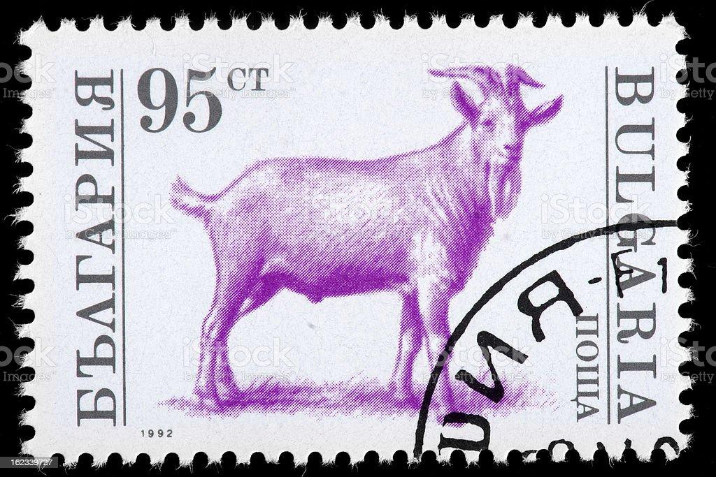 Ram Goat on Bulgaria Vintage Postage Stamp, White and Purple stock photo