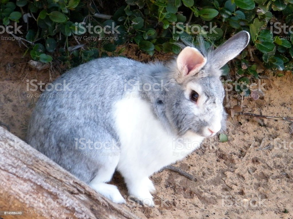 Ramat Gan Wolfson Park Rabbit 2011 stock photo