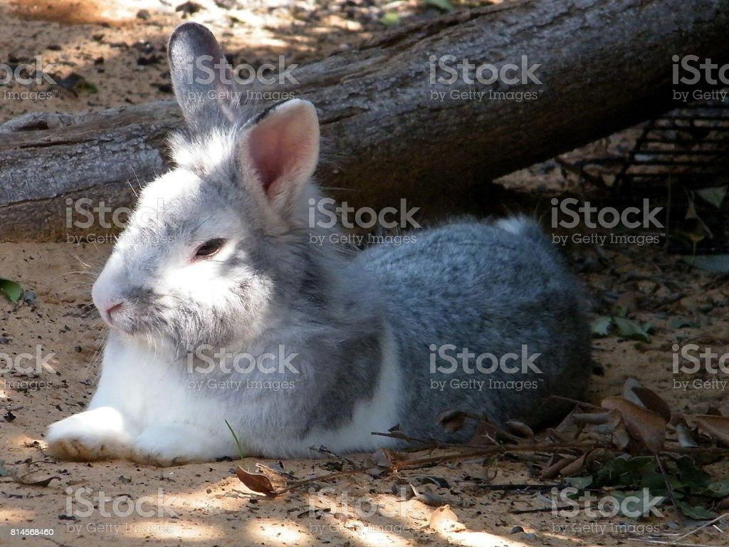 Ramat Gan Wolfson Park Rabbit March 2011 stock photo