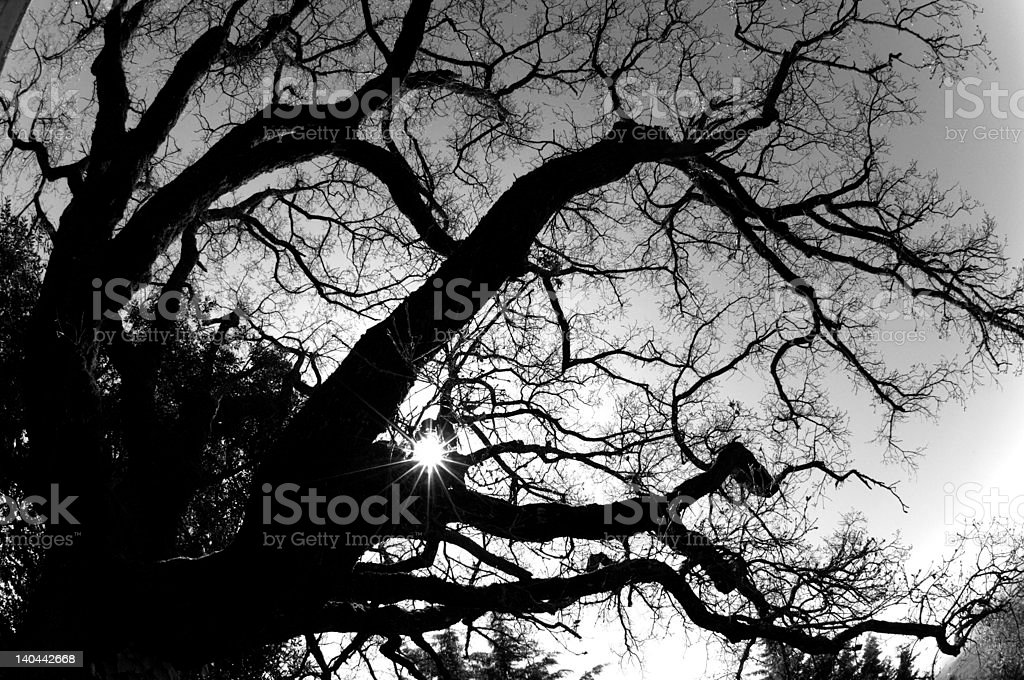 ramification tree royalty-free stock photo