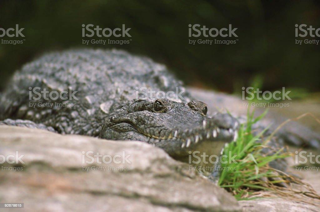 Rampant Raptor stock photo