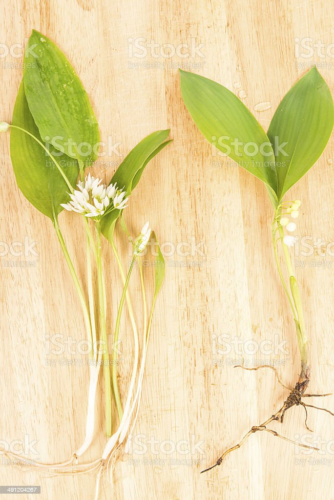 Ramson and Lily of the valley stock photo