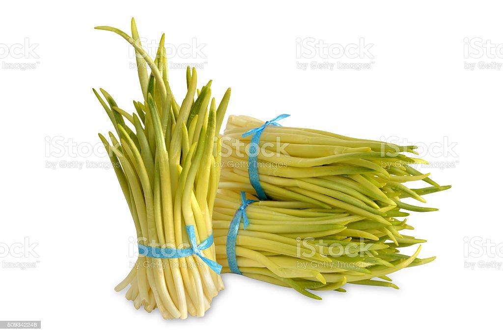 ramson, wild garlic. stock photo