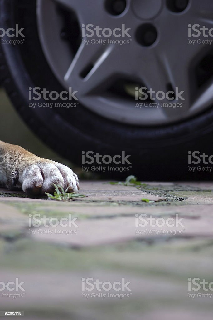 Ran over dog stock photo