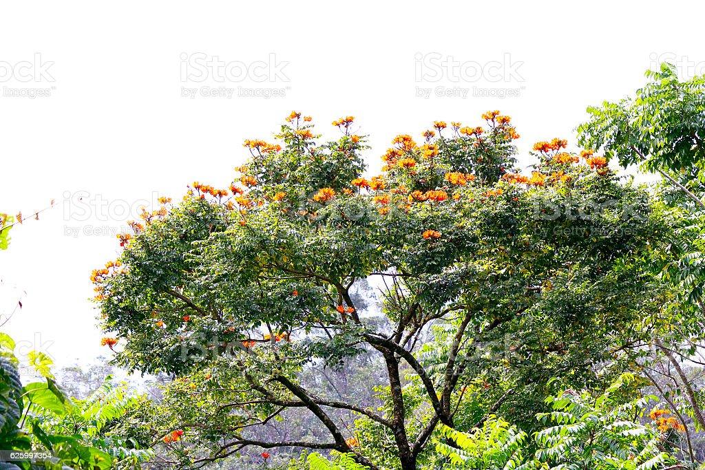 Ranamafana rainforest - Madagascar stock photo