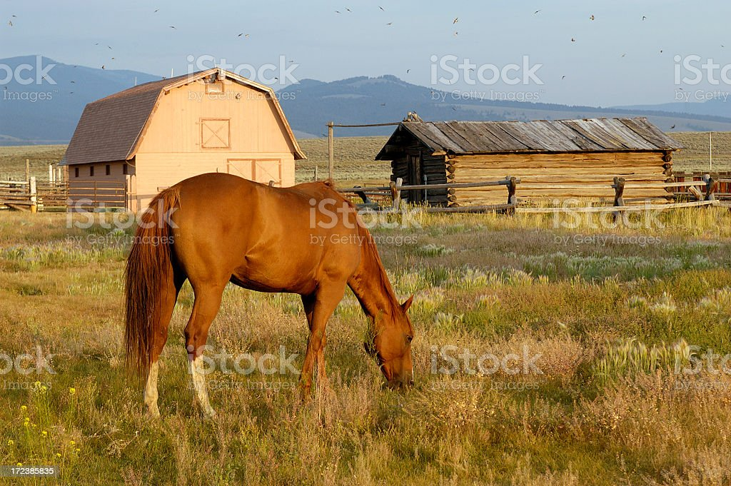 Ranch Horse in Evening Light stock photo