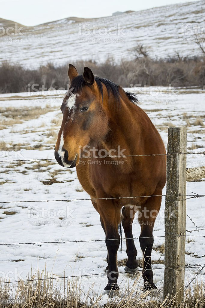 Ranch Horse stock photo