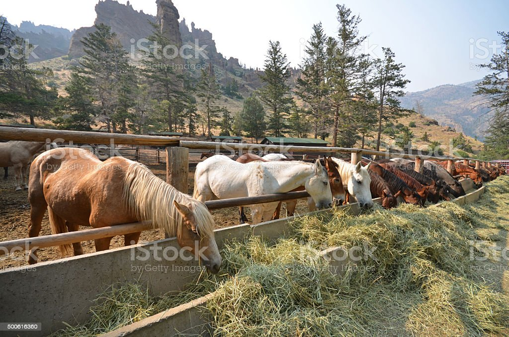 Ranch horses stock photo