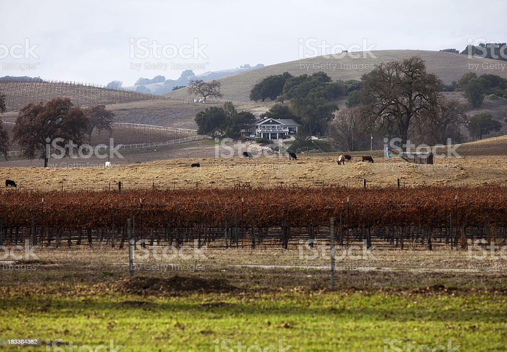 Ranch in the Vines stock photo