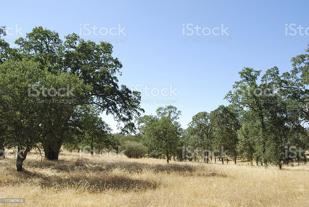 Ranch landscape royalty-free stock photo