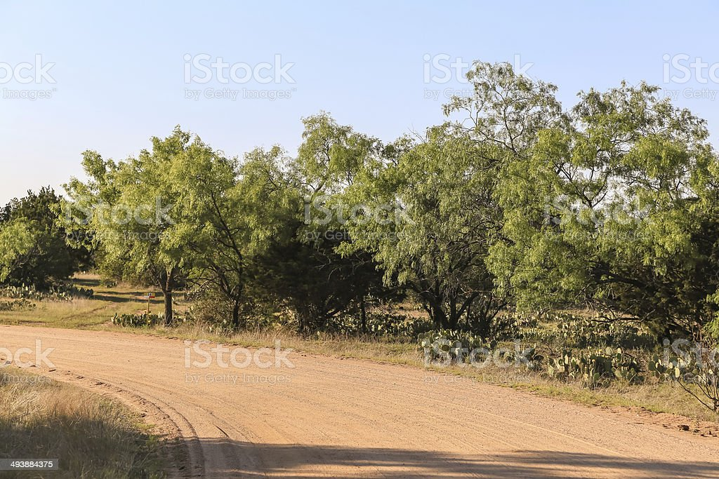 Ranch Road and Mesquite Trees stock photo