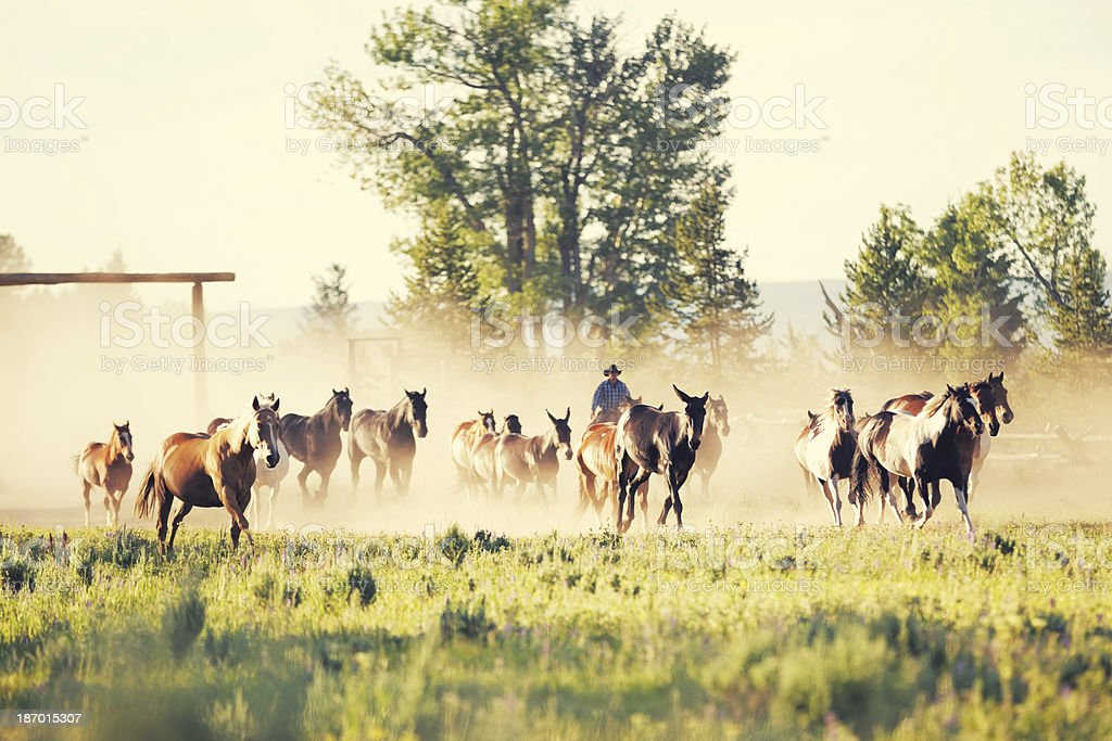 Rancher driving horses in on Montana ranch royalty-free stock photo